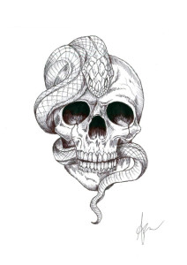 Skull_1 A. Zottoli